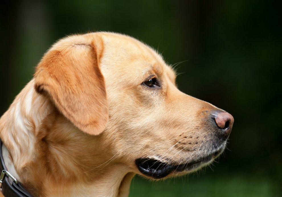 dog-1194083_1920
